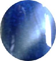 Farbgel Royal Blue 5gr.